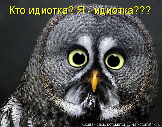 Котоматрица: Кто идиотка? Я - идиотка???