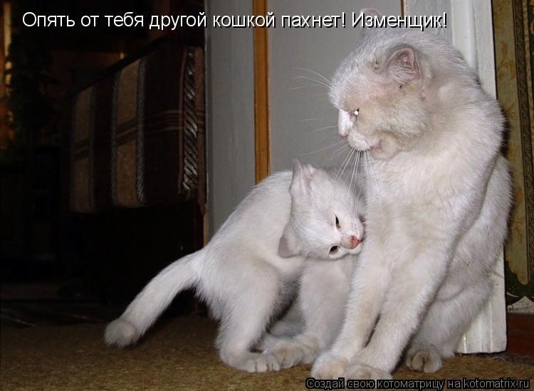 Котоматрица: Опять от тебя другой кошкой пахнет! Изменщик!