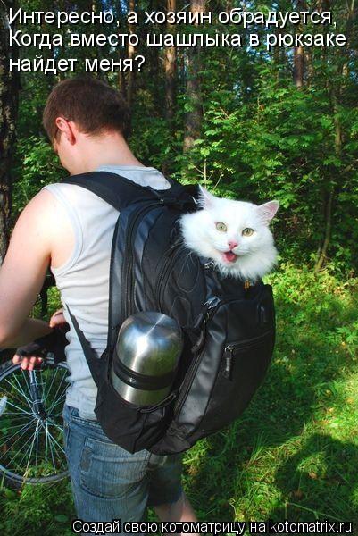 Котоматрица: Интересно, а хозяин обрадуется Когда вместо шашлыка в рюкзаке найдет меня? ,