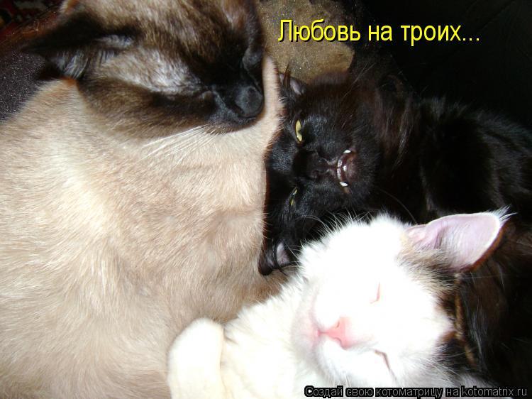 Котоматрица: Любовь на троих...