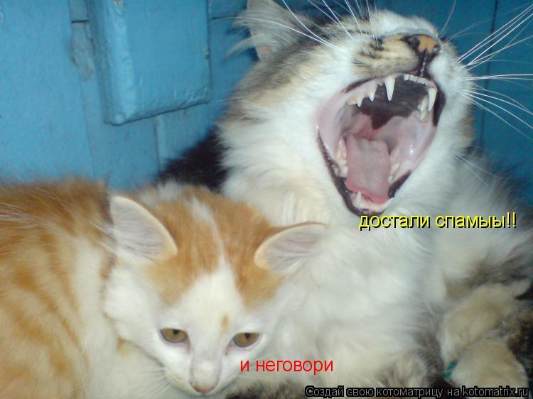 Котоматрица: достали спамыы!! и неговори