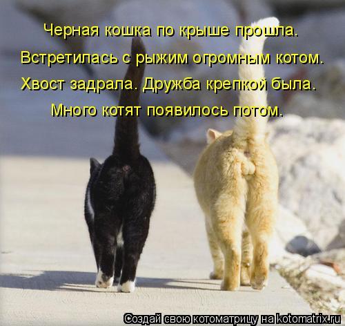 Котоматрица: Черная кошка по крыше прошла. Встретилась с рыжим огромным котом. Хвост задрала. Дружба крепкой была. Много котят появилось потом.