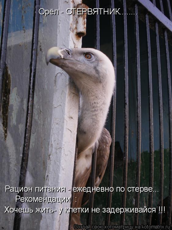 Котоматрица: Орёл - СТЕРВЯТНИК........ Рацион питания - ежедневно по стерве...   Рекомендации  :   Хочешь жить- у клетки не задерживайся !!!