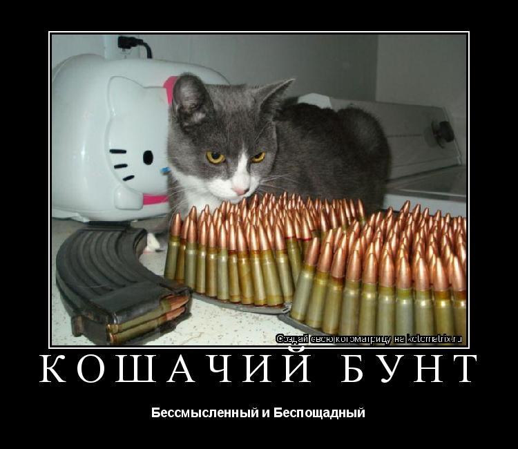 Котоматрица: кошачий бунт Бессмысленный и Беспощадный