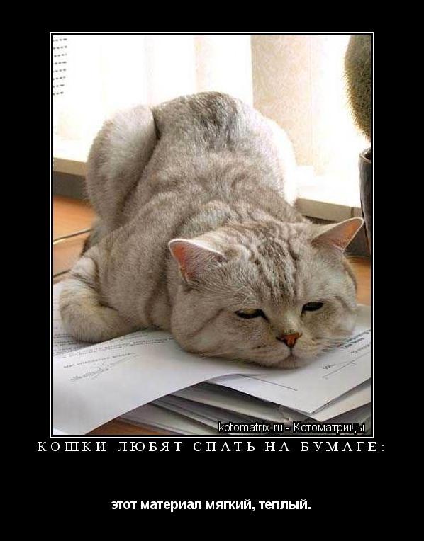 Котоматрица: Кошки любят спать на бумаге: этот материал мягкий, теплый.