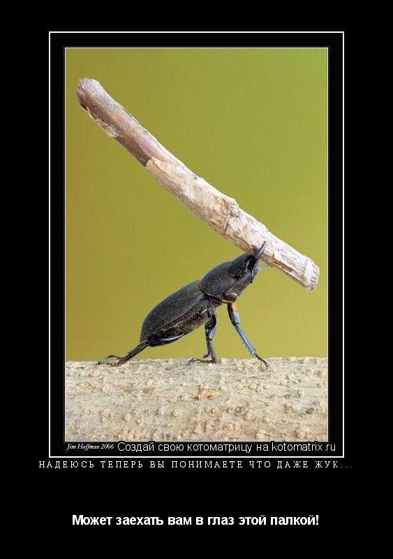 Котоматрица: Надеюсь теперь вы понимаете что даже жук... Может заехать вам в глаз этой палкой!