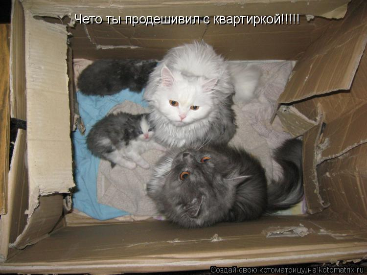 Котоматрица: Чето ты продешивил с квартиркой!!!!!