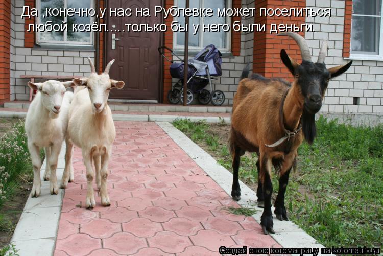 Котоматрица: Да ,конечно,у нас на Рублевке может поселиться любой козёл.....только бы у него были деньги.