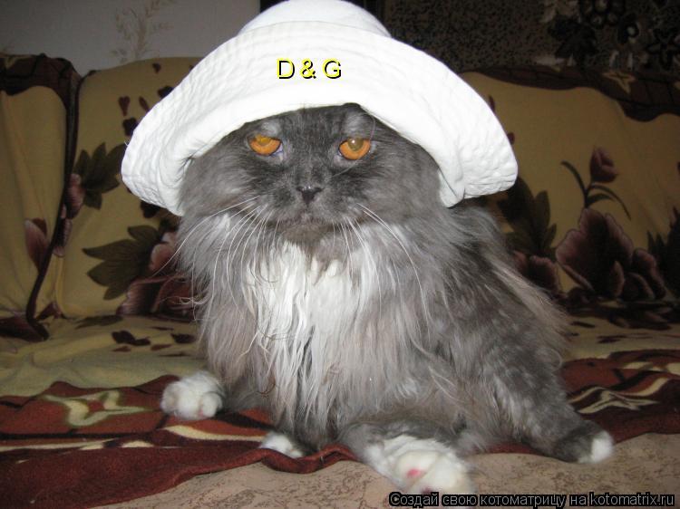 Котоматрица: D & G