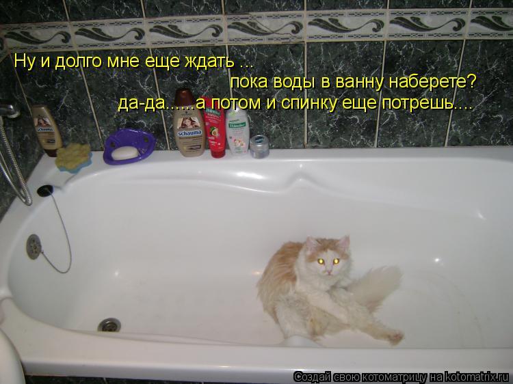 Котоматрица: Ну и долго мне еще ждать ... пока воды в ванну наберете? да-да......а потом и спинку еще потрешь....