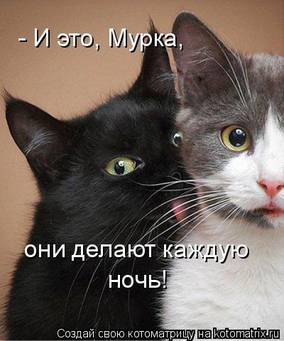 Котоматрица: - И это, Мурка,  они делают каждую  ночь!