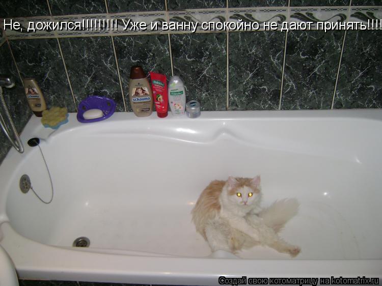 Котоматрица: Не, дожился!!!!!!!!! Уже и ванну спокойно не дают принять!!!!!!!!!