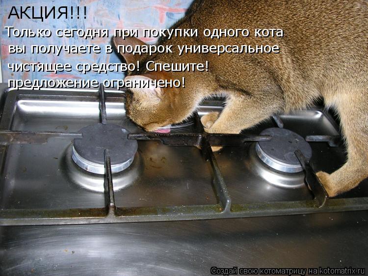 Котоматрица: АКЦИЯ!!! Только сегодня при покупки одного кота вы получаете в подарок универсальное  чистящее средство! Спешите! предложение ограничено!