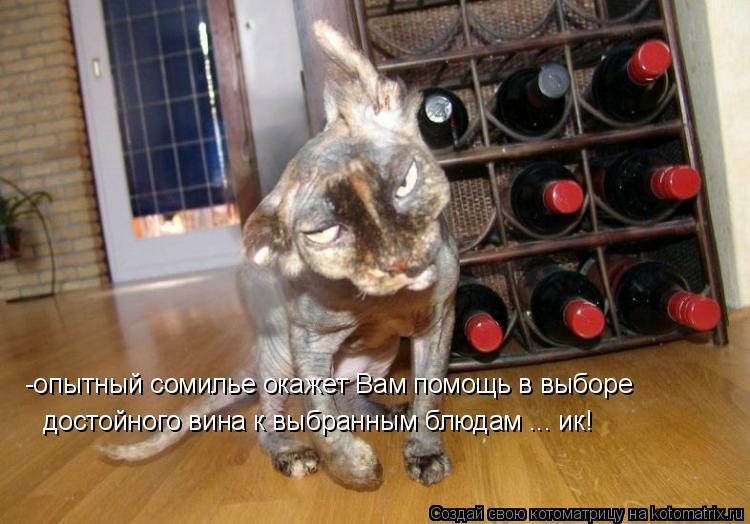 Котоматрица: -опытный сомилье окажет Вам помощь в выборе достойного вина к выбранным блюдам ... ик!