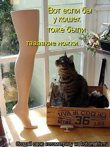 Котоматрица: Вот если бы у кошек тоже были таааакие ножки...