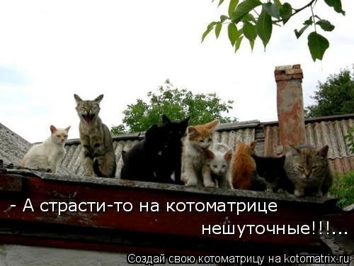 Котоматрица: - А страсти-то на котоматрице  нешуточные!!!...