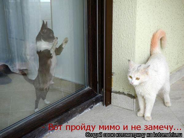 Котоматрица: - Вот пройду мимо и не замечу...