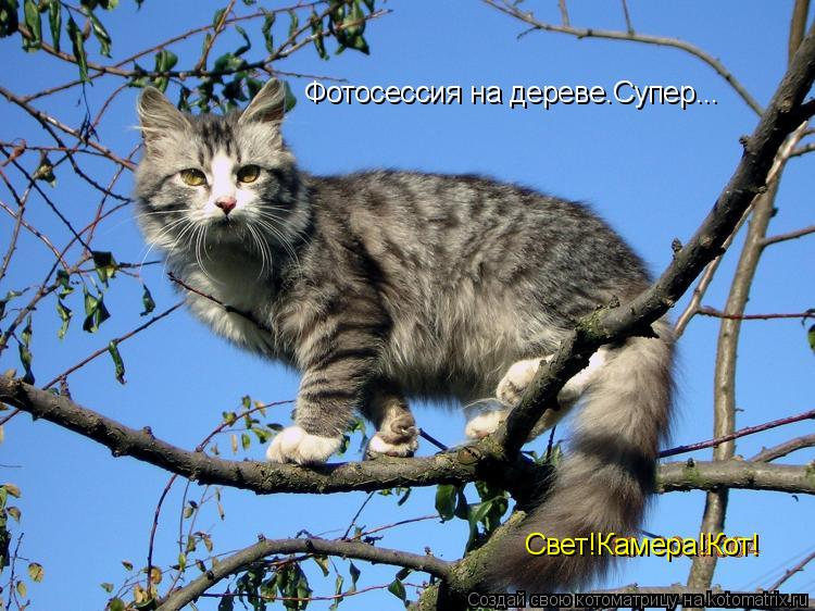 Котоматрица: Фотосессия на дереве.Супер... Свет!Камера!Кот!