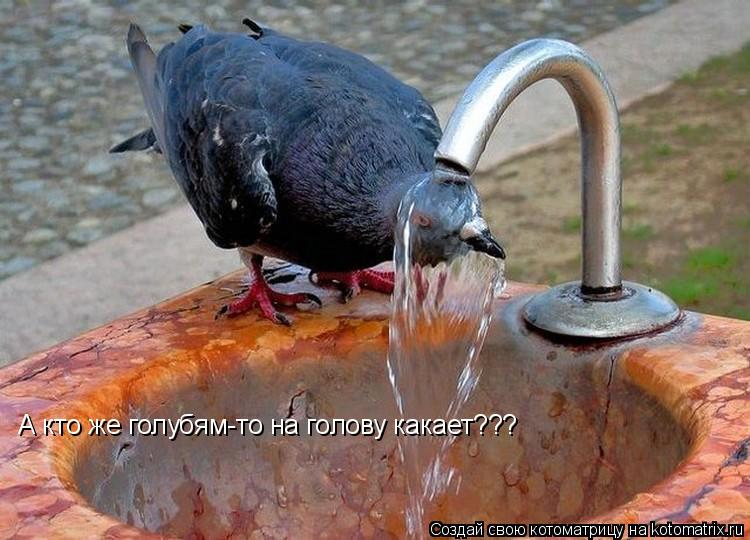 Котоматрица: А кто же голубям-то на голову какает???