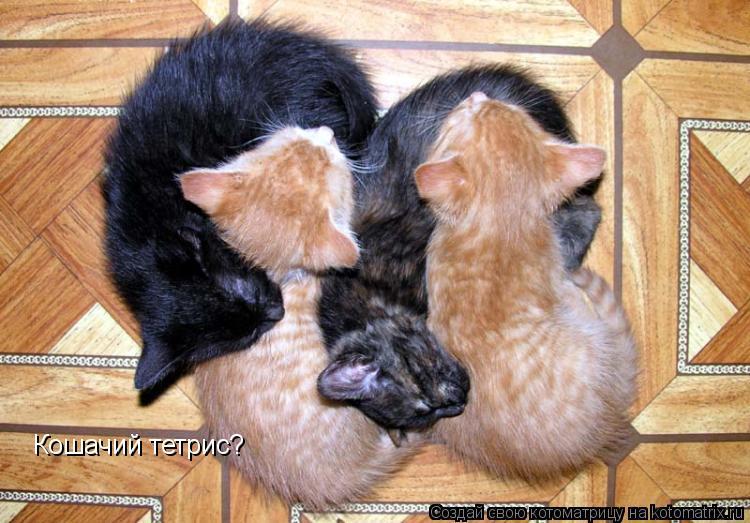 Котоматрица: Кошачий тетрис?