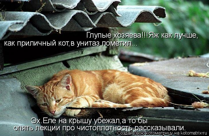 Котоматрица: Глупые хозяева!!!Яж как лучше, Глупые хозяева!!!Яж как лучше, как приличный кот,в унитаз пометил... опять лекции про чистоплотность рассказыва