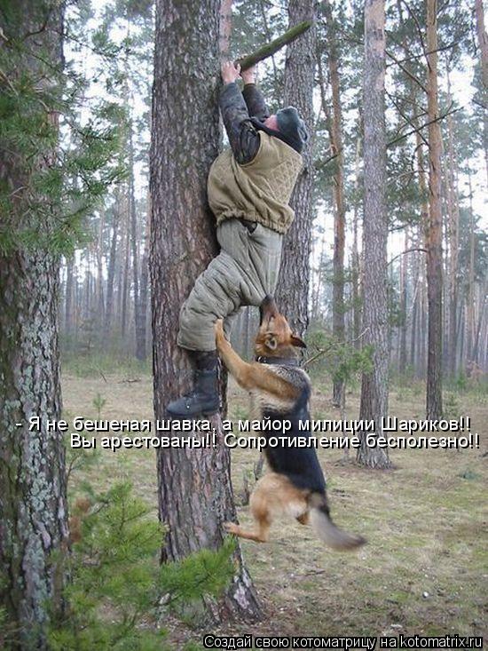Котоматрица: - Я не бешеная шавка, а майор милиции Шариков!! Вы арестованы!! Сопротивление бесполезно!!