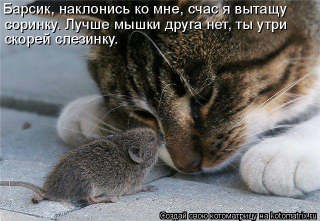 Котоматрица: Барсик, наклонись ко мне, счас я вытащу  соринку. Лучше мышки друга нет, ты утри  скорей слезинку.