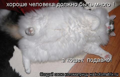 Котоматрица: хороше человека должно быть много ! а кошек  подавно!