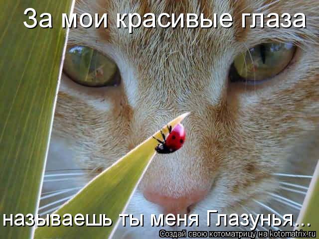 Котоматрица: За мои красивые глаза  называешь ты меня Глазунья...