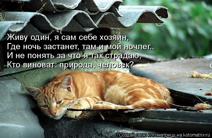 Котоматрица: Живу один, я сам себе хозяин, Где ночь застанет, там и мой ночлег.. И не понять за что я так страдаю, Кто виноват: природа, человек?