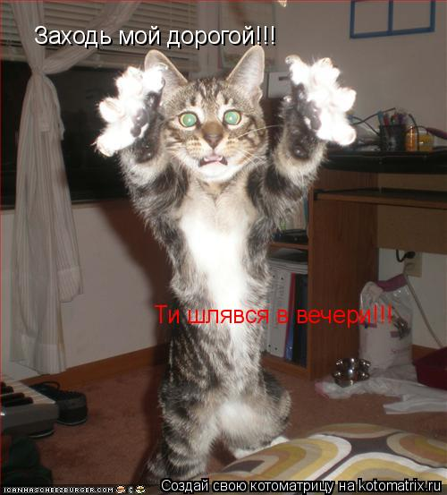Котоматрица: Заходь мой дорогой!!! Ти шлявся в вечери!!!