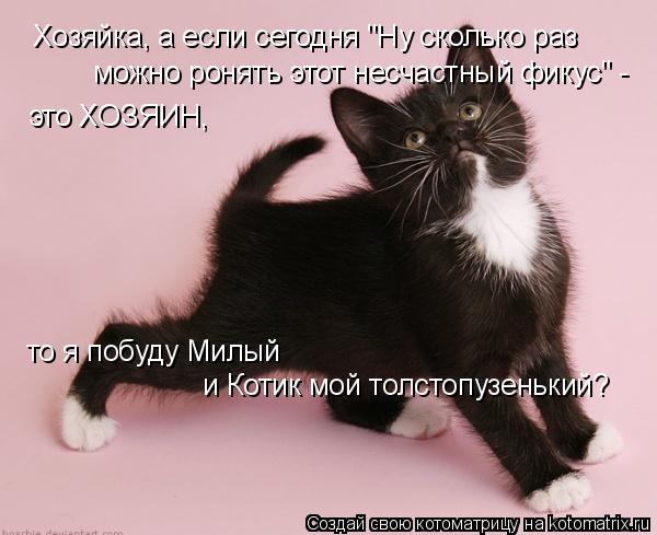 """Котоматрица: Хозяйка, а если сегодня """"Ну сколько раз можно ронять этот несчастный фикус"""" -  это ХОЗЯИН, то я побуду Милый  и Котик мой толстопузенький?"""