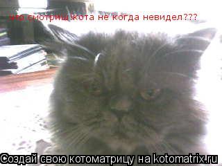 Котоматрица: что смотриш!кота не когда невидел???