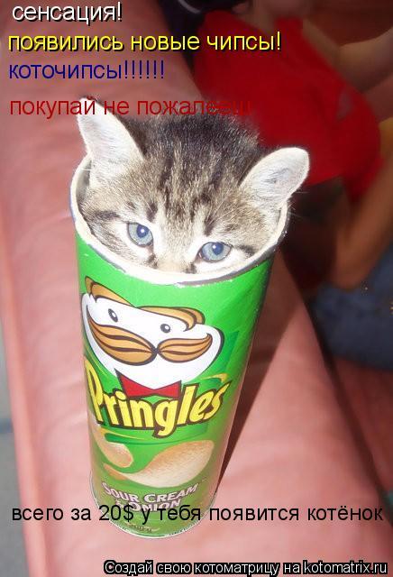 Котоматрица: сенсация! появились новые чипсы! коточипсы!!!!!! покупай не пожалееш всего за 20$ у тебя появится котёнок
