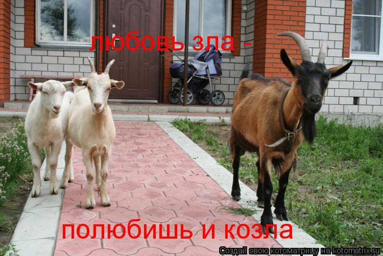 Котоматрица: любовь зла - полюбишь и козла