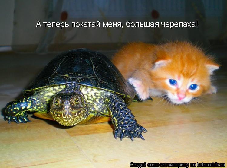 Котоматрица: А теперь покатай меня, большая черепаха!