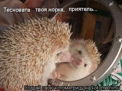 Котоматрица: Тесновата твоя норка, приятель...