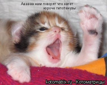 Котоматрица: Аааааа нам говорят что катет короче гипотенузы...