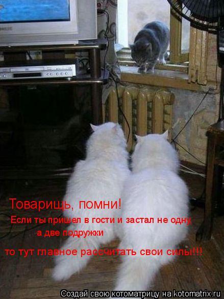 Котоматрица: Товарищь, помни! Если ты пришел в гости и застал не одну, а две подружки то тут главное рассчитать свои силы!!!