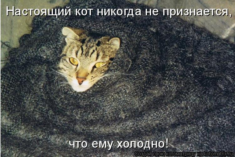 Котоматрица: Настоящий кот никогда не признается, что ему холодно!