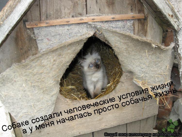 Котоматрица: Cобаке создали человеческие условия жизни, а у меня началась просто собачья жизнь...
