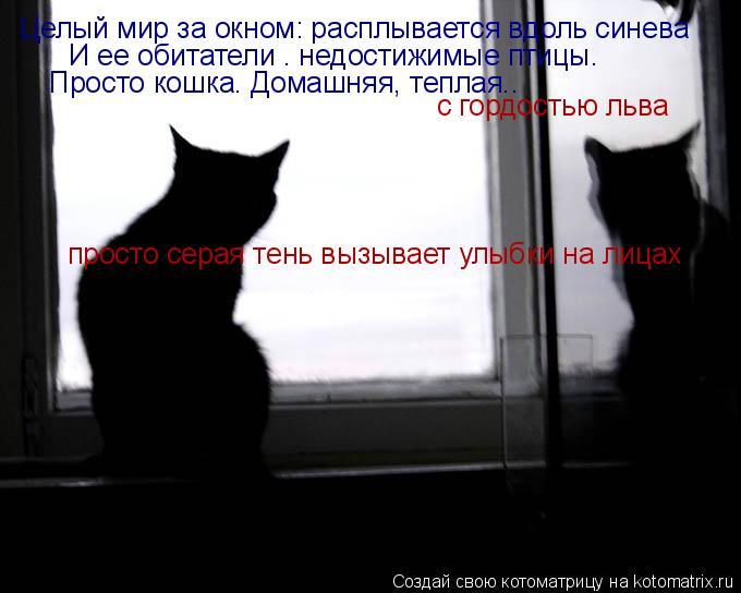 Котоматрица: Целый мир за окном: расплывается вдоль синева И ее обитатели – недостижимые птицы. Просто кошка. Домашняя, теплая..  с гордостью льва просто