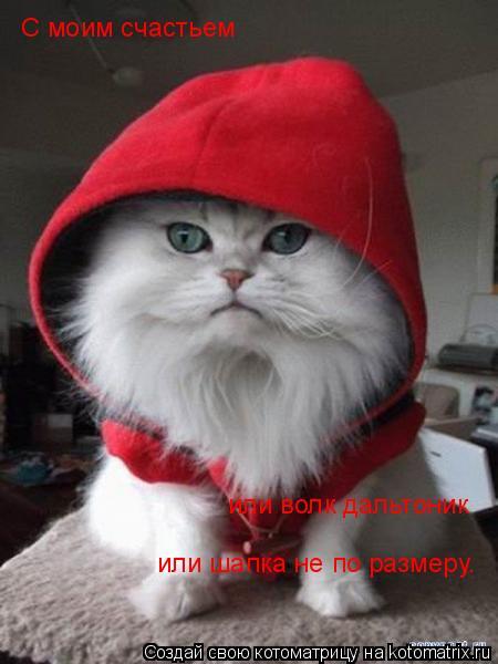 Котоматрица: С моим счастьем  или волк дальтоник  или шапка не по размеру.