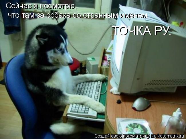 Котоматрица: Сейчас я посмотрю,  что там за собака со странным именем  ТОЧКА РУ.