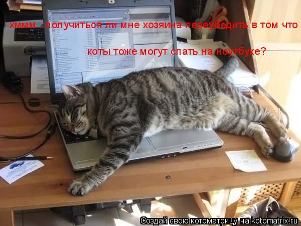 Котоматрица: хммм...получиться ли мне хозяина переубедить в том что  коты тоже могут спать на ноутбуке?