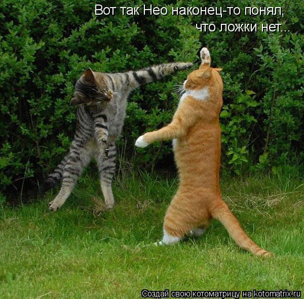 Котоматрица: Вот так Нео наконец-то понял, что ложки нет...