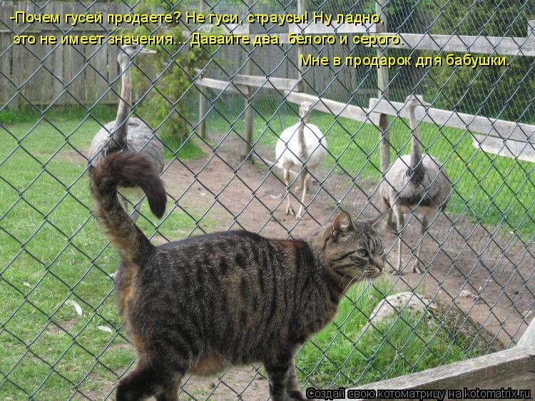 Котоматрица: -Почем гусей продаете? Не гуси, страусы! Ну ладно,  это не имеет значения... Давайте два, белого и серого.  Мне в продарок для бабушки.
