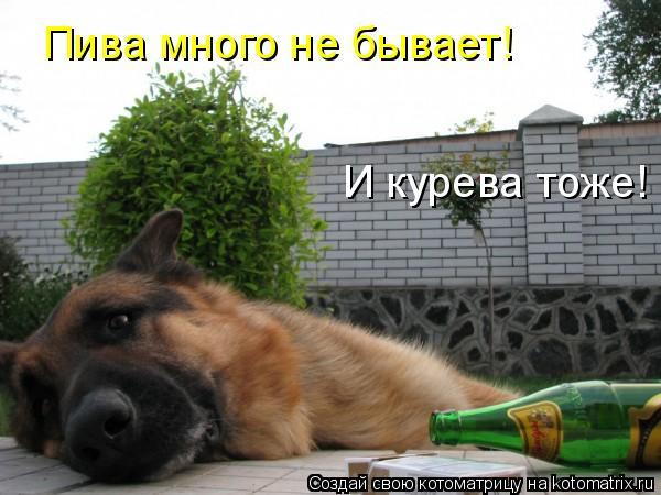 Котоматрица: Пива много не бывает!  И курева тоже!