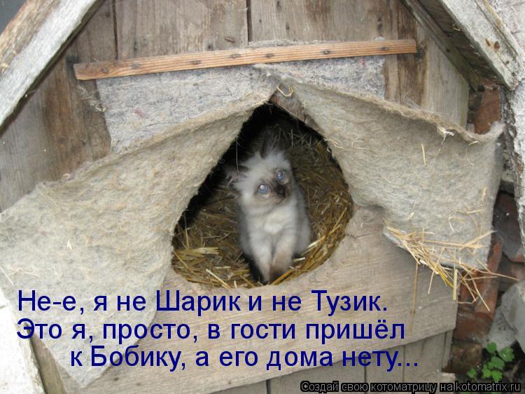 Котоматрица: Не-е, я не Шарик и не Тузик. Это я, просто, в гости пришёл к Бобику, а его дома нету...