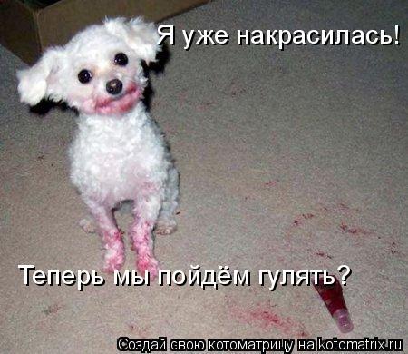Котоматрица: Я уже накрасилась! Теперь мы пойдём гулять?